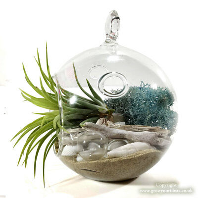 Air Plant Tillandsia Kit Glass Sphere Hanging Terrarium With Water