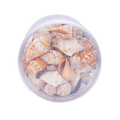 1 Box 80-100x Assorted Natural Conch ShellS Seashell with Hole for DIY Craft