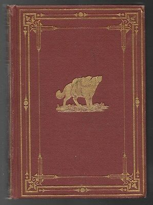 The Inn Of The Guardian Angel Antique Illustrated Children Dog Book 1871 Nice!