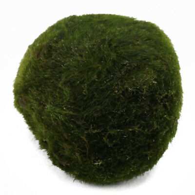 Green Large Moss Ball Cladophora Live Plant Home Fish Tank Aquarium Grass Decor