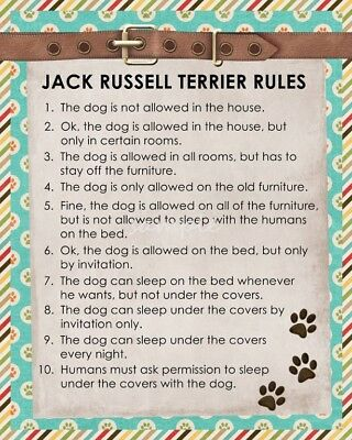 JACK RUSSELL TERRIER Rules 8 x 10 Magnet