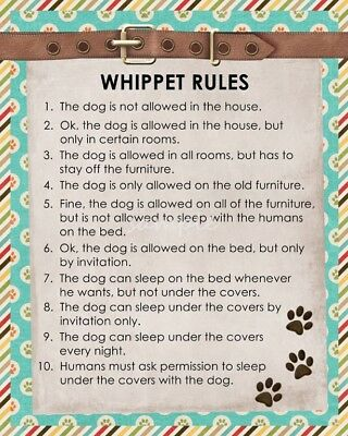 WHIPPET Rules 8 x 10 Magnet