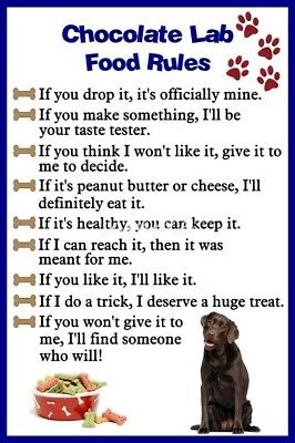 CHOCOLATE LAB  Food Rules Magnet