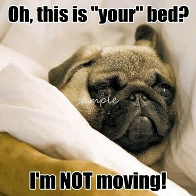 PUG This is Your Bed Magnet 3.75 x 3.75in