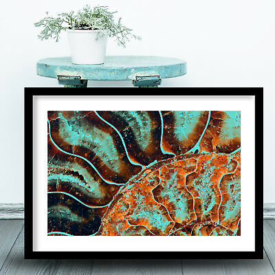 Abstract Aqua Brown FOSSIL Art PRINT Macro Photo Framed Poster / Box Frame