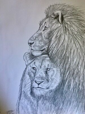 Lions,Couple Male and Female,Big Cats,drawing painting pencil on aquarelle11by14
