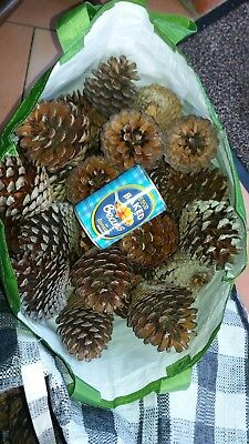 Joblot Large Dry Pine Cones Xmas Decoration Art Craft 40-50 5-6Kg Fast Delivery