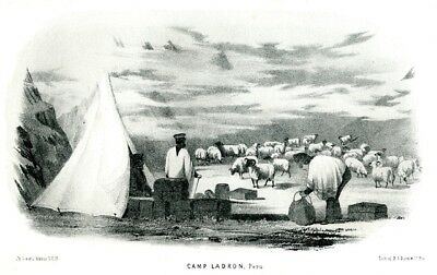 Camp Ladron - Peru - Lithographie aus Exploration of the Valley of the Amazon