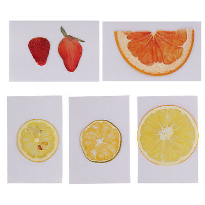 Dried Fruit Slices Specimen for Xmas Home Garden Wreath Florist Decoration