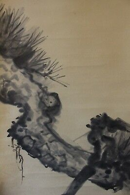 A01R8 ~Beautiful Pine Tree for Tea Ceremony~ Japanese hanging scroll