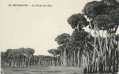 Cpa Liban Beyrouth La Foret Des Pins