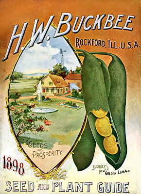 Seed Catalogue Cover H.W.Buckbee5 1898   Vintage Advertising Art  Print / Poster