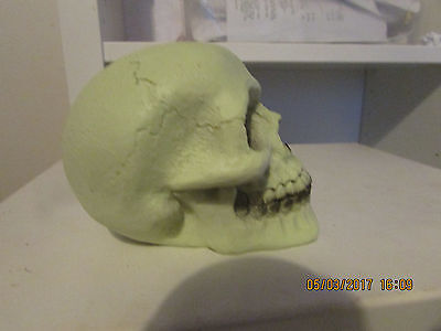 "Latex Mould Mold Of A Very Small Skull  3.5"" Long X 2.5"" Wide X 2.5"" Tall"