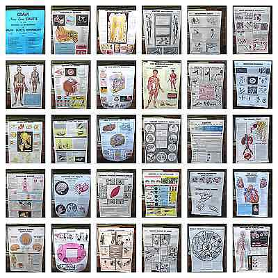 Vintage Cram's Health, Saftey, Personality Chart Wall School home Science Poster