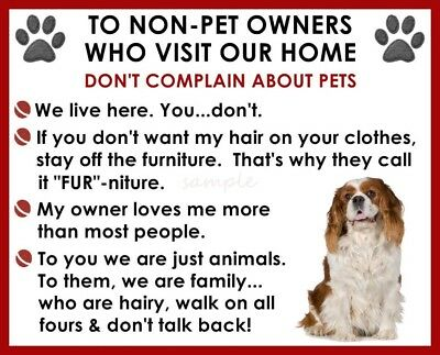 CAVALIER KING CHARLES House Rules for Non Pet Owners Fridge Magnet