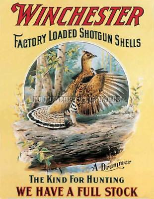 Antique Ruffed Grouse Hunting Winchester Advertising Repro 8X10 Photograph Print