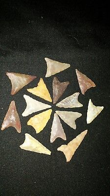 Authentic Arrowheads 13 desert triangles lot high quality a51