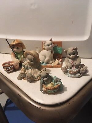 Lot Of Calico Kittens