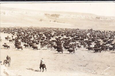 vintage Cowboy ROUND-UP RPPC Sanborn A-764, Cattle Ranch in Background