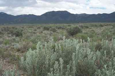Trees Huge 10 Acre Elko Nevada Ranch Off Grid Hunting Land Lot  No Reserve