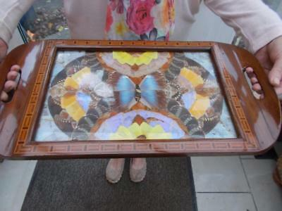 Wooden Glass Marquetry Butterfly Wing Tray Brazil Art Deco Taxidermy