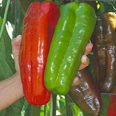 Marconi Peppers Seeds Giant Pepper Home Garden Vegetable Plant Green Red Peppers