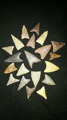 Authentic Arrowheads 20 Neolithic triangle points high quality. C21