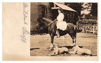 RPPC MY GUESS Whippet (also English Whippet or Snap dog HORSE