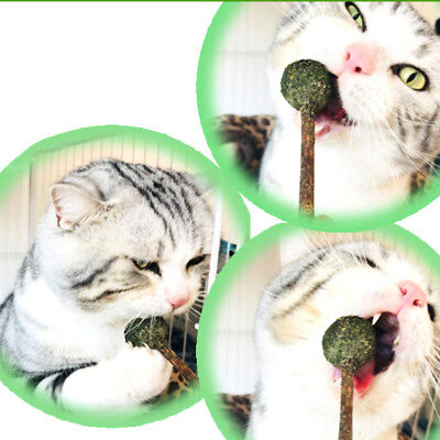 Health Cat Mint Ball Toys Coated Catnip Pet Kitten Gasping Play Game Toy&@