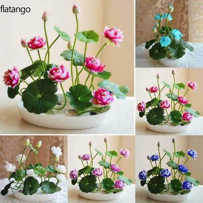 New Nice Adorable Flower Fragrant Blooms Lotus Seeds Bonsai Rare Garden Colorful