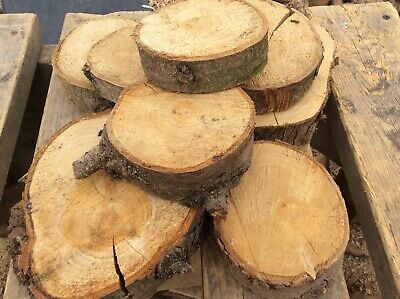 20 Large log slices,rustic wedding,centrepeace, decorative log
