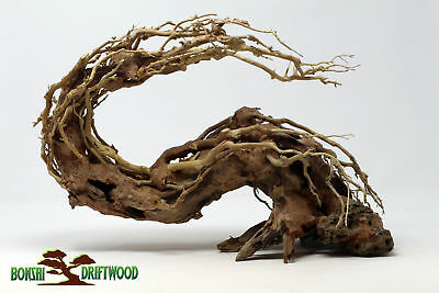 Aquarium Driftwood Bonsai Tree Quince Aquascape Fish Planted Freshwater Sp 1 231 00 Picclick
