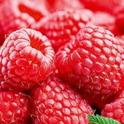 10 'Autumn Bliss' Red Raspberry Canes Bare Root FREE DELIVERY