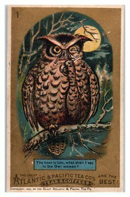 What to Tell Owl Wife? Great Atlantic & Pacific Tea Co 1883 Victorian Trade Card