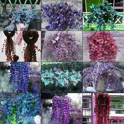 Rare Ivy Flower Seeds Garden Potted Air Purification for Wedding Party KFBY