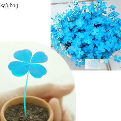 New Nice Adorable Flower Fragrant Seeds Plant Blooms Blue Clover Seeds KFBY