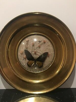 Brass Plate With Stuffed Taxidermy Butterfly, Decorative Antique,Vintage Unusual