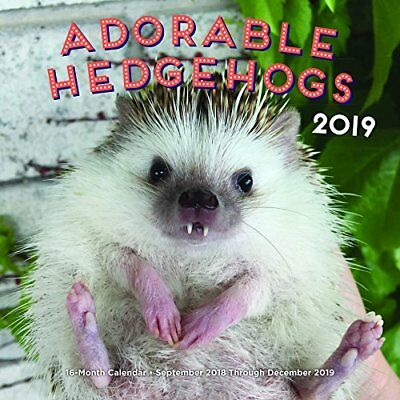 Adorable Hedgehogs 2019 Calendar: 16-month Calendar - September 2018 Through Dec