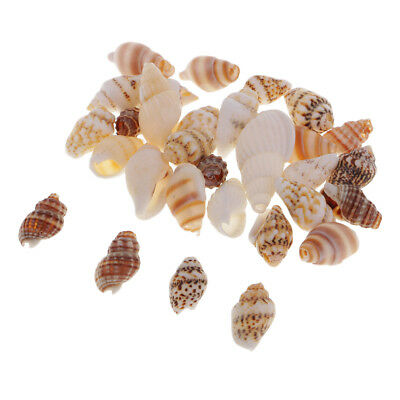 30pcs Natural Shells Seashells Beach Shells Wedding Craft Aquarium Sea Decor