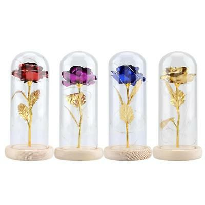 Preserved Rose Flower LED Light with Glass Cover Valentines'Day Wedding Gift