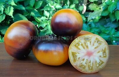 Blue Tomato LUCID GEM 15 Seeds Vegetable Garden Organic