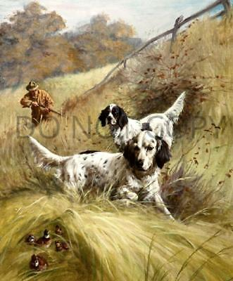 Antique Reproduction 8X10 Quail Hunting English Setters Photo Print