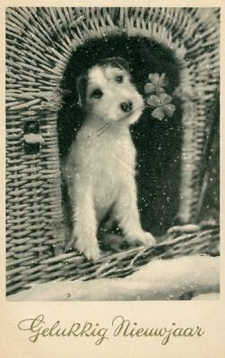 Old New Year Postcard Fox Jack Russell Terrier Dog 4 Leaf Clover c1930 Germany