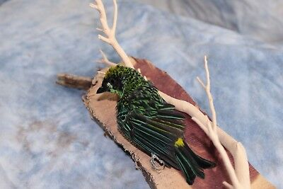 Taxidermy Bird Ornithology Aviary Specimen Feathers - Green & Gold Tanager