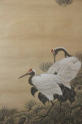 J00R4 ~双鶴 Beautiful Double Cranes & Pine Tree~ Japanese hanging scroll