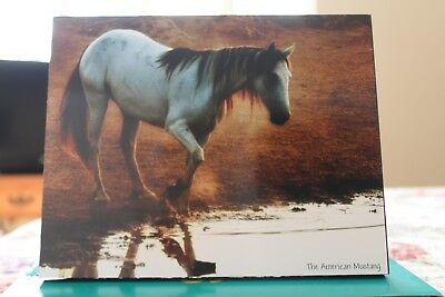 Mustangs/Equine/Horse Photo. Pictures. Loaded on wooden panel 8x10 Mustang