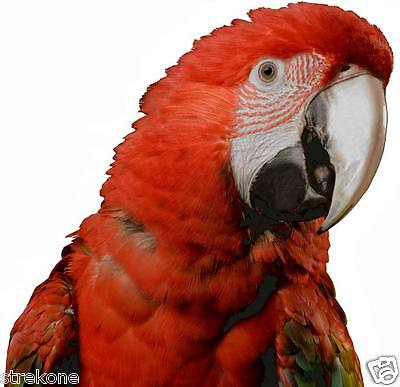 MACAW Rainforest Bird Parrot Large Big Head Window Cling Decal Stick-On - NEW