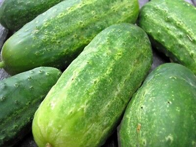 Cucumber, Boston Pickling Cucumber Seeds , Heirloom, Organic 25 Seeds, Great For