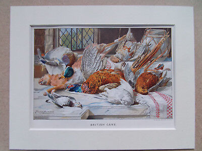 "GAME BIRDS PHEASANT DUCK ANTIQUE 1880 PRINT  7x9"" MOUNT"