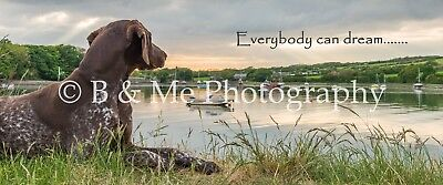 New German Shorthaired Pointer GSP Dog Canvas 30 inches